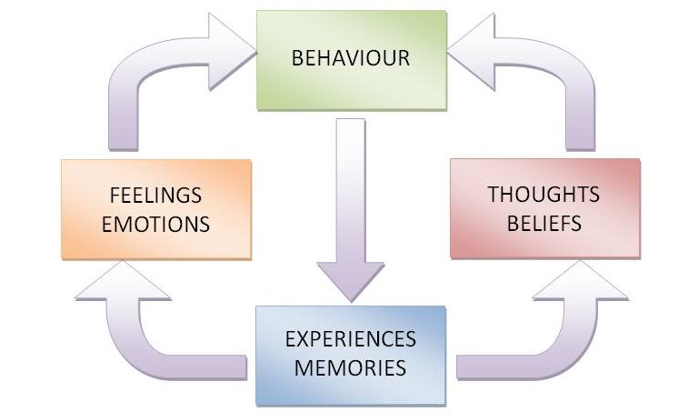 behaviour cycle