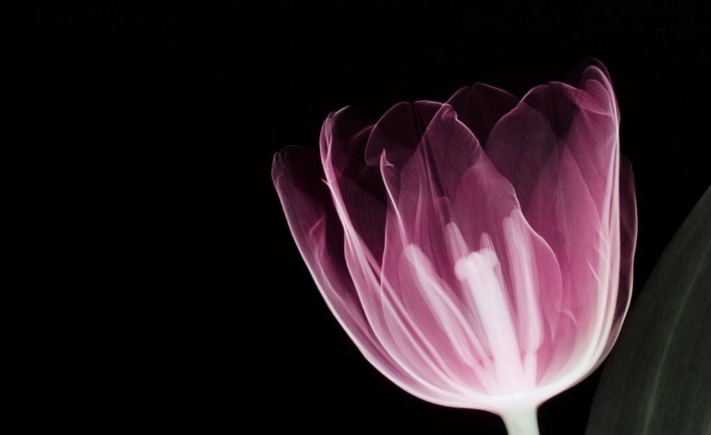 flower 3 Ss30031