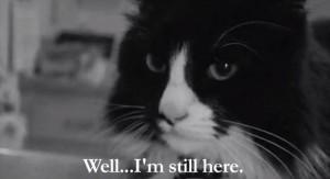 Henri le chat