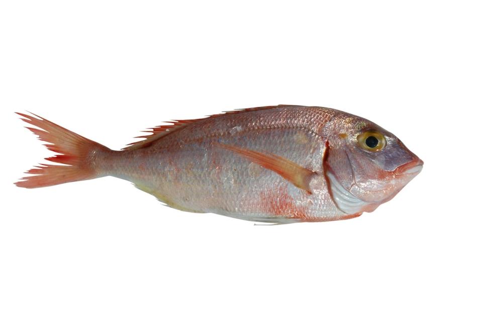 fish-6-1371653-1279x850