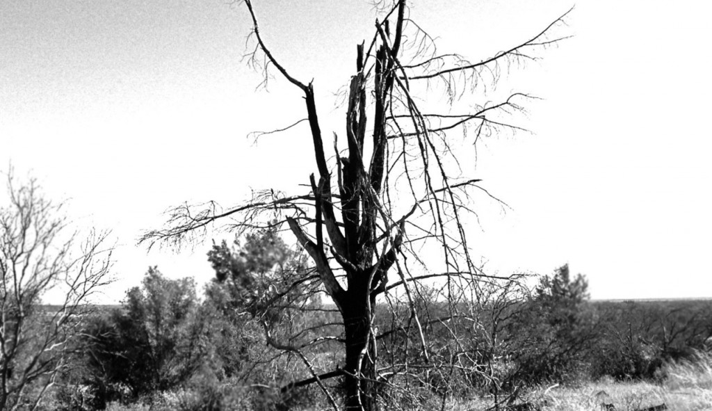 dead-tree-1544101-1279x1146