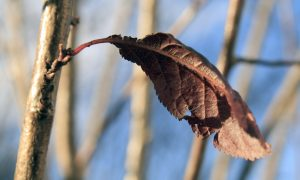 brown-leaf-1342077-1279x852